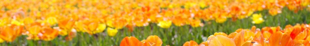 つぼみ保育園 | 熊本市 認可保育園 | 熊本市中央区国府にある認可保育園